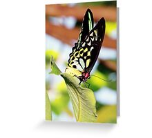 flutterby Greeting Card