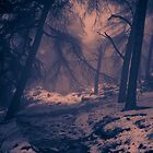 Winter wood by Brett Trafford