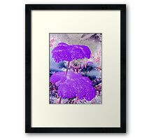 Purple Yarrow-Available As Art Prints-Mugs,Cases,Duvets,T Shirts,Stickers,etc Framed Print