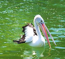 Pelican Dreams by JuliaWright
