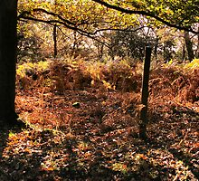 Forest Floor in Autumn by Jennie Anderson