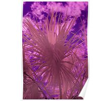 Infrared Palm Poster