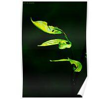 Green Streaks of Lights Poster