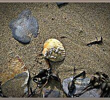 The Sea Shore. by Malcolm Chant