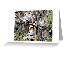 My Friend, The Tree Greeting Card