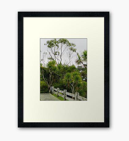 Cabbage Trees  Botanic Gardens Wellington  New Zealand Framed Print