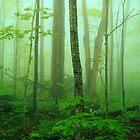 HARDWOOD FOREST,SPRING MIST by Chuck Wickham