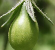 Green Tomato by John Billing