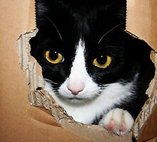 Cat in a Box! by Ingz