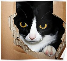 Cat in a Box! Poster