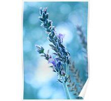 Lavender Bokeh Poster