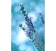 Lavender Bokeh Photographic Print
