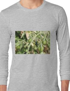 Bunch of Tomatoes T-Shirt