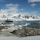 Panorama - penguin colonies, cruise ship & tourists by cascoly