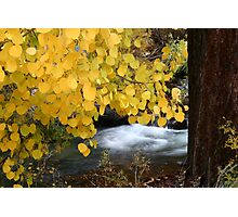 Rushing Stream Fall Color Photographic Print