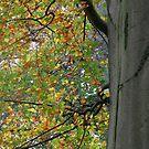 Birch by Debbie Vine
