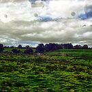 Look outside (P1140261 _XnView _Qtpfsgui _GIMP) by Juan Antonio Zamarripa [Esqueda]