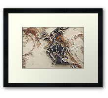 sea sculptures  Framed Print