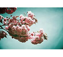Pink blossoms Photographic Print