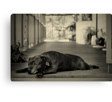 Sometimes I Just Feel so Old Canvas Print