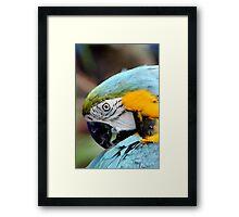 Colorful Nature Framed Print