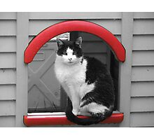 SC cat Photographic Print