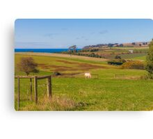 Tasmanian Farmland Canvas Print