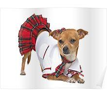 Dog in skirt Poster