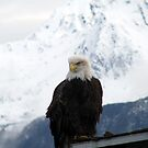 Eagle by lilestduncan