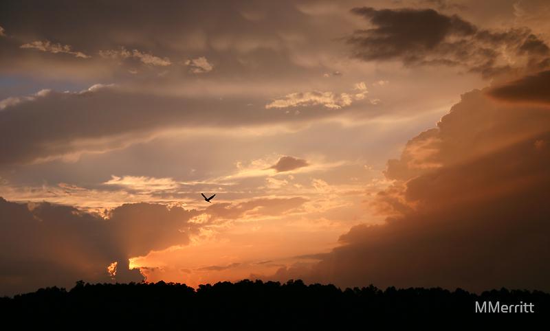Flying Home by MMerritt