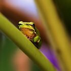 Little Green Frog by Nickie