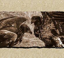 Beak To Beak by Gail Bridger