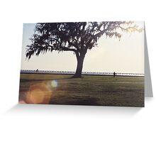 live oak on lakefront Greeting Card