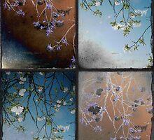 Variations by Melanie  Dooley