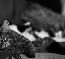 Sleepy Kitten by MrSheps