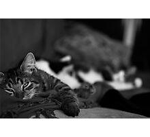 Sleepy Kitten Photographic Print