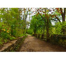 Dreamy Forest Road With Flowers - Impressions Of Spring Photographic Print