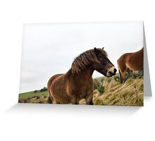Horse on the cliffs Greeting Card