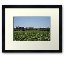 Irrigating Beans Framed Print