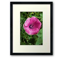 Early Summer Blooms Impressions – Bright Pink Malva Vertical Framed Print