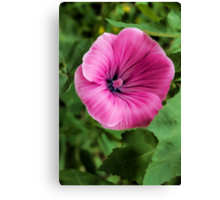 Early Summer Blooms Impressions – Bright Pink Malva Vertical Canvas Print