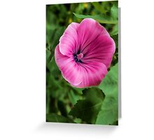 Early Summer Blooms Impressions – Bright Pink Malva Vertical Greeting Card