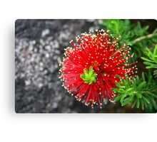 Red Brush Canvas Print