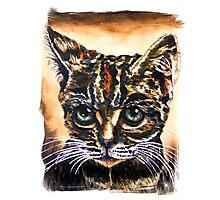 Kitty Photographic Print