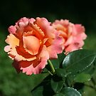 Peachy Keen by Monnie Ryan