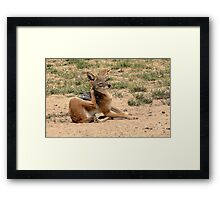 The itch... Framed Print