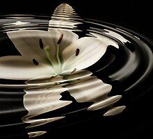 Water lily by NKSharp
