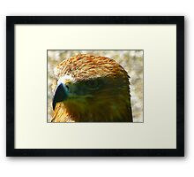 The Beak Framed Print