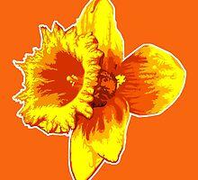 Blood Orange Atomic Daffodil, Fire Flower, Apocalyptic Garden by O O