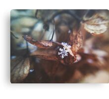 Lonely Snowflake Canvas Print
